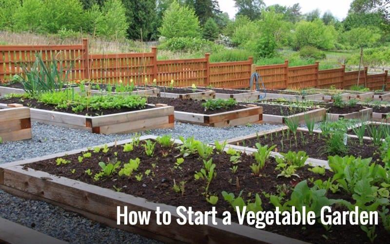 چگونه بهترين نتيجه را از باغچه سبزيكاريمان به دست بياوريم؟
