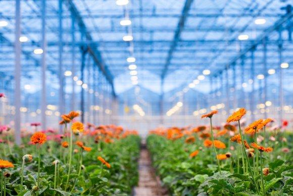چگونه گلخانه ای سالم و بهداشتی داشته باشیم؟